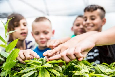 Where youth learn to grow, care for, and harvest their own fruits and vegetables